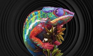 Protected: Chameleon